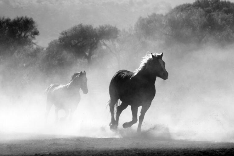 Strategia i projekt strony dla First Horse on the Moon